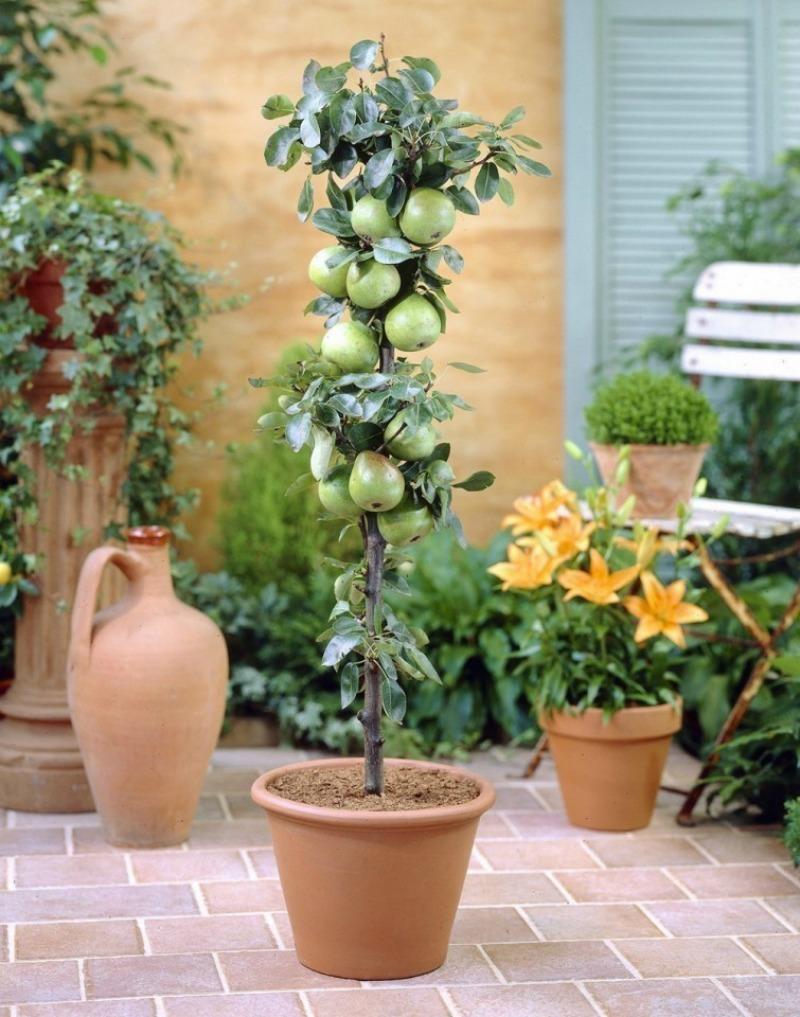 Aprende a cultivar rboles frutales en tu patio o balc n - Cuando plantar frutales ...
