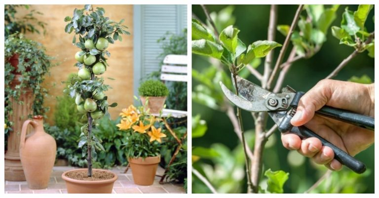 Aprende a cultivar rboles frutales en tu patio o balc n - Plantar arboles frutales ...