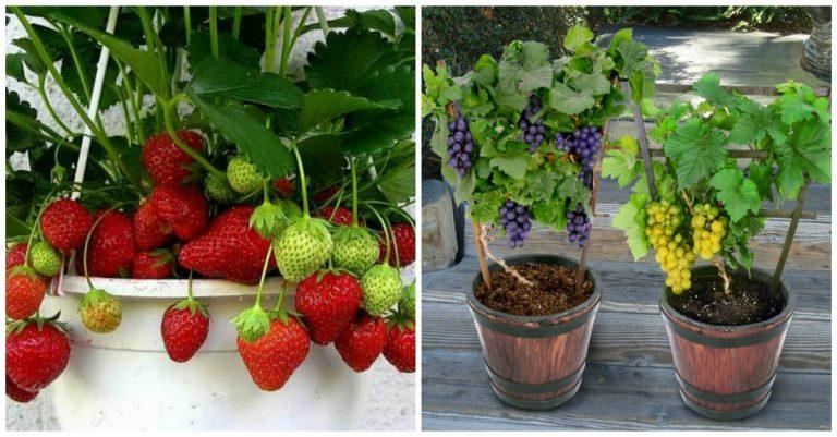 7 rboles y arbustos frutales que puedes cultivar en tu for Jardines con arboles y arbustos