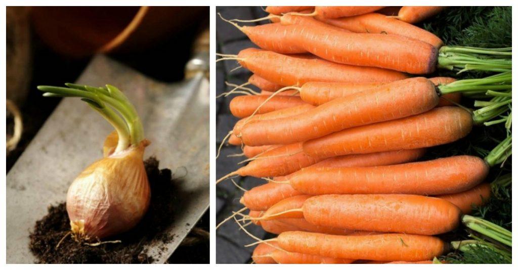 18 vegetales que puedes cultivar en casa y beneficiarte de for Cultivar vegetales en casa