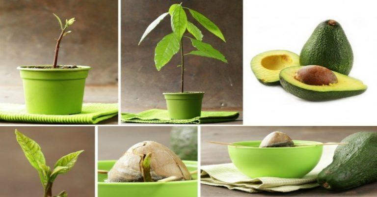 7 Árboles Frutales Que Puedes Tener En Casa Sólo Guardando Sus ...