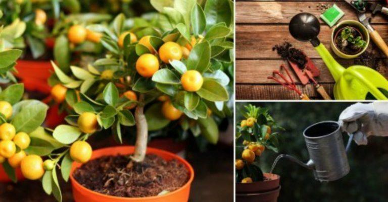 conoce las claves para cultivar Árboles frutales en macetas