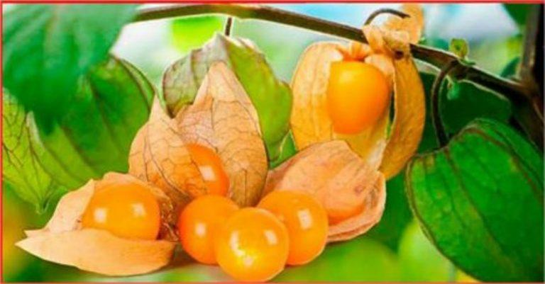 fruta que sirve para la prostata
